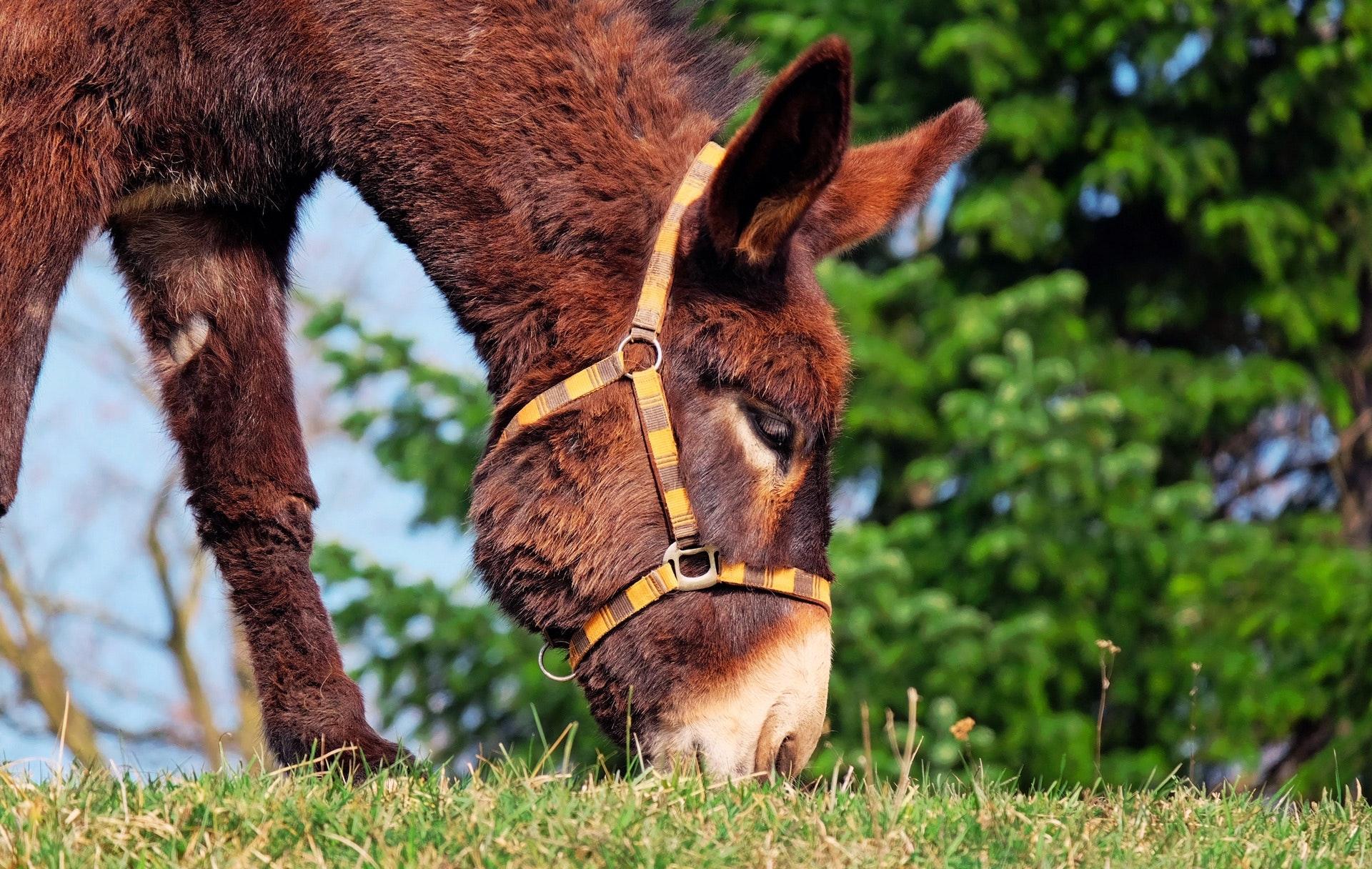 animal-cute-donkey-255343